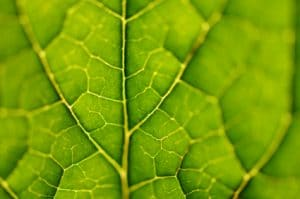 Mass Spectrometry BioFuel Leaf